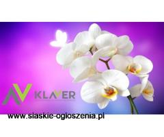 Pielęgnacja kwiatów doniczkowych- praca w Holandii od zaraz